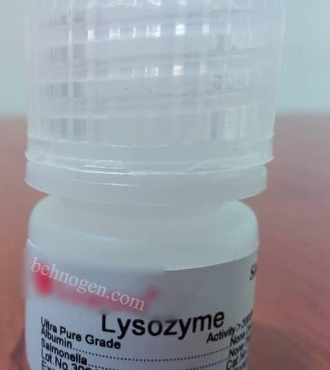 لیزوزیم